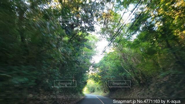 道路の脇にある木の写真・画像素材[4771163]