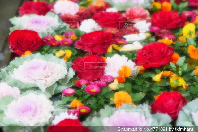 【行田花手水week】前玉神社の花手水の写真・画像素材[4771091]