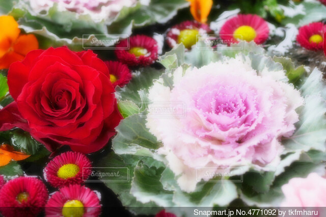 【行田花手水week】前玉神社の花手水の写真・画像素材[4771092]