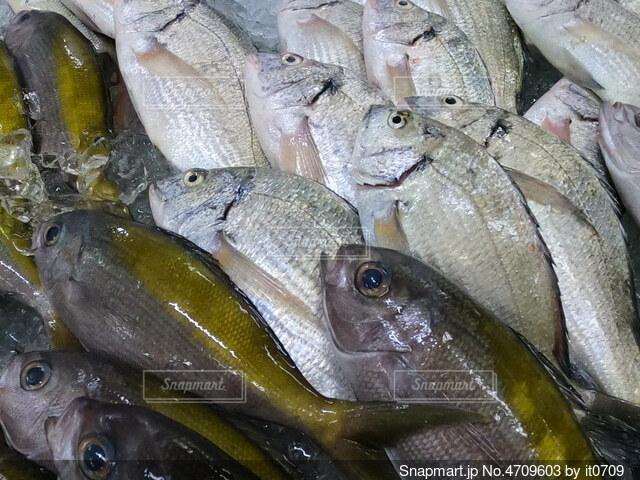 市場の魚たちの写真・画像素材[4709603]