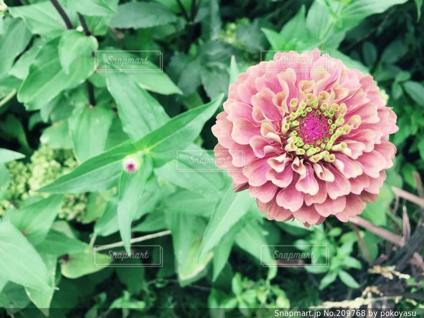 花の写真・画像素材[209768]