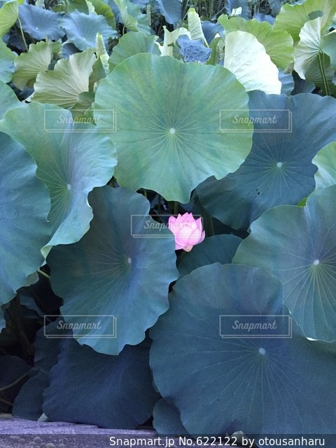 自然の写真・画像素材[622122]