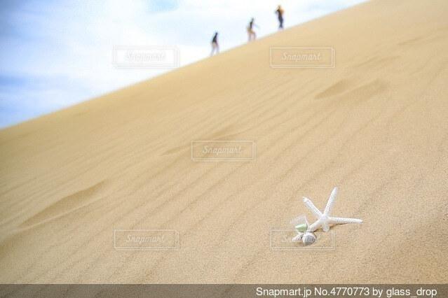 砂の中ヒトデの写真・画像素材[4770773]
