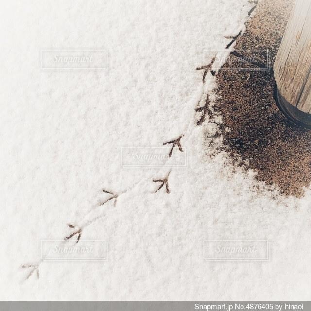 雪上の鳥の写真・画像素材[4876405]