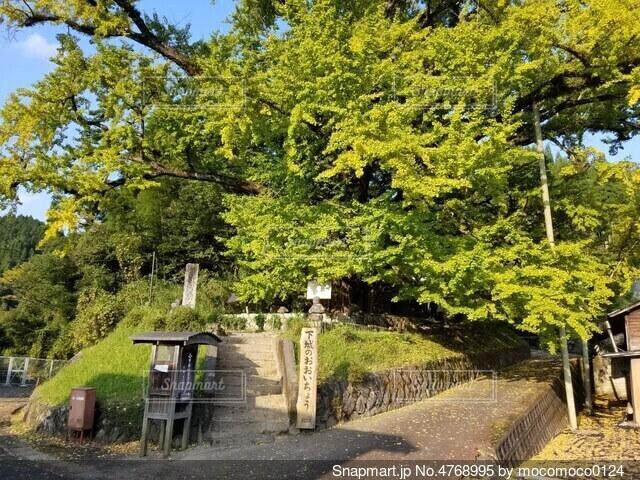 道路の脇にある木の写真・画像素材[4768995]
