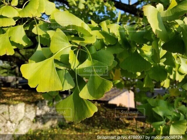 木の中で育つ植物の写真・画像素材[4768997]