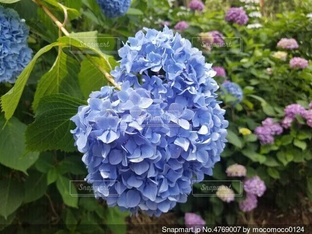 花のクローズアップの写真・画像素材[4769007]