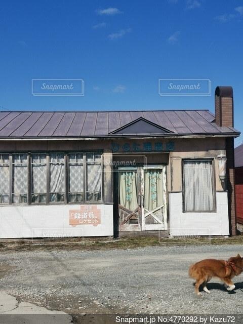 建物の前に立っている犬の写真・画像素材[4770292]