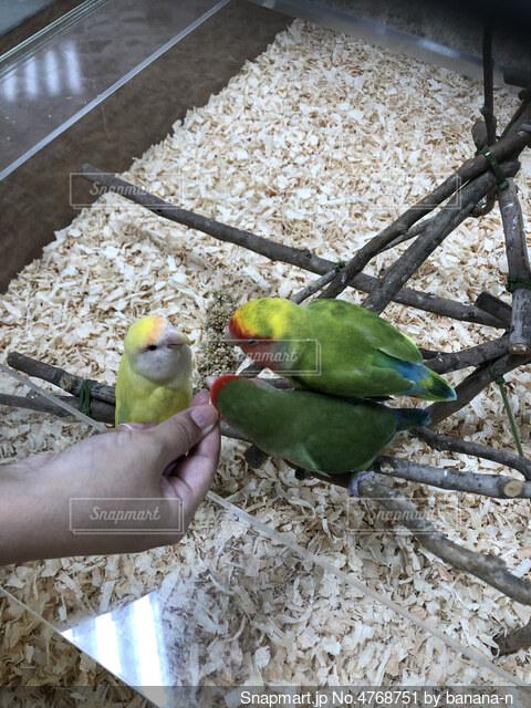 鳥の写真・画像素材[4768751]