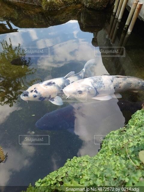 太宰府天満宮にての写真・画像素材[4872572]