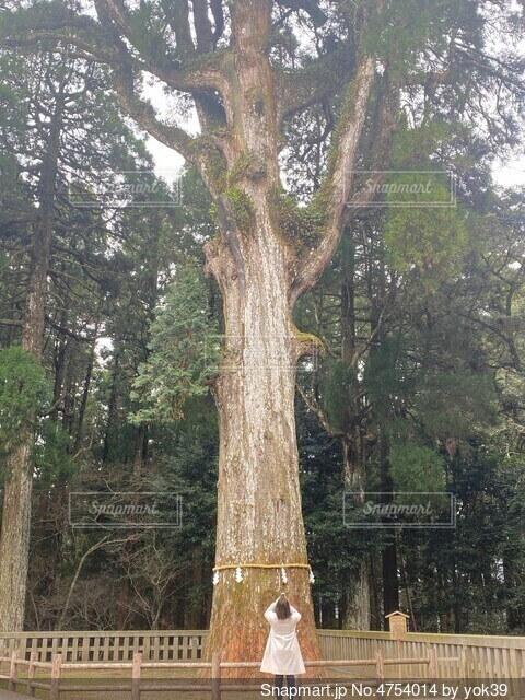 鹿児島の霧島神宮にある、大きな木の下の女性の写真・画像素材[4754014]
