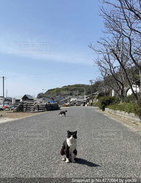 島で暮らす猫の背景の写真・画像素材[4770564]