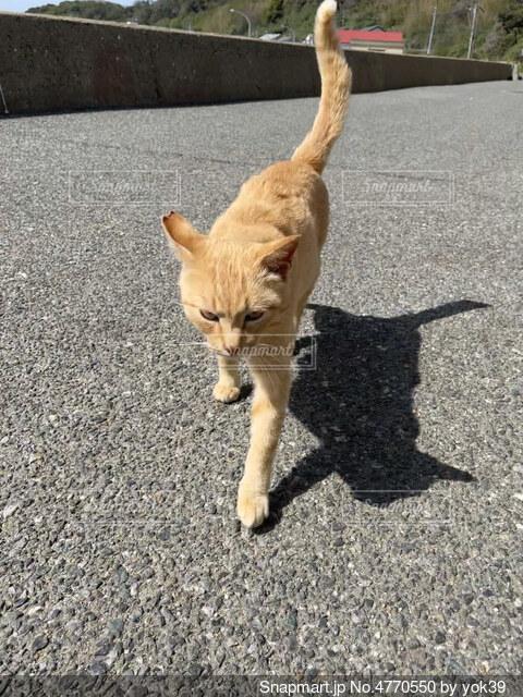 島で道を歩いている猫の背景の写真・画像素材[4770550]