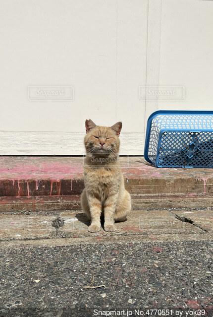 島で座っている猫の背景の写真・画像素材[4770551]