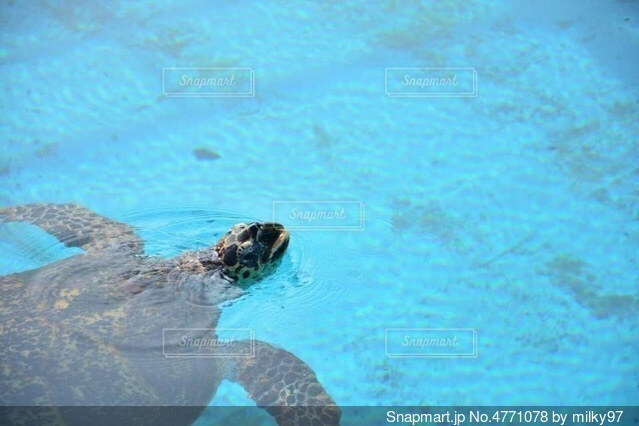 ウミガメさんこんにちは!!の写真・画像素材[4771078]