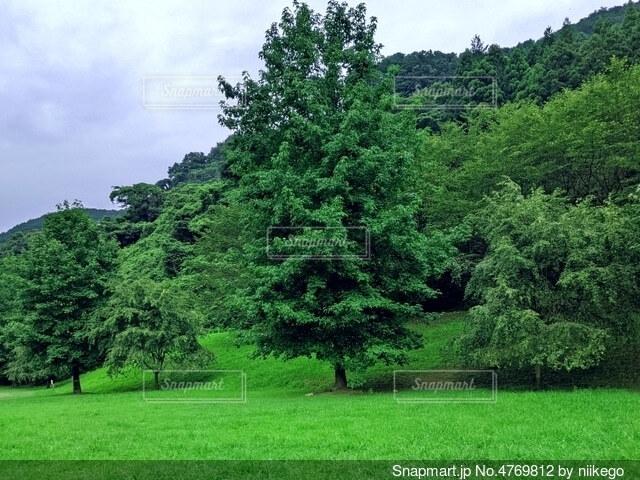 緑豊かな場所にそびえ立つ樹木の写真・画像素材[4769812]