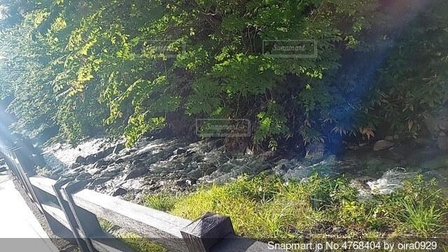 公園のベンチの写真・画像素材[4768404]