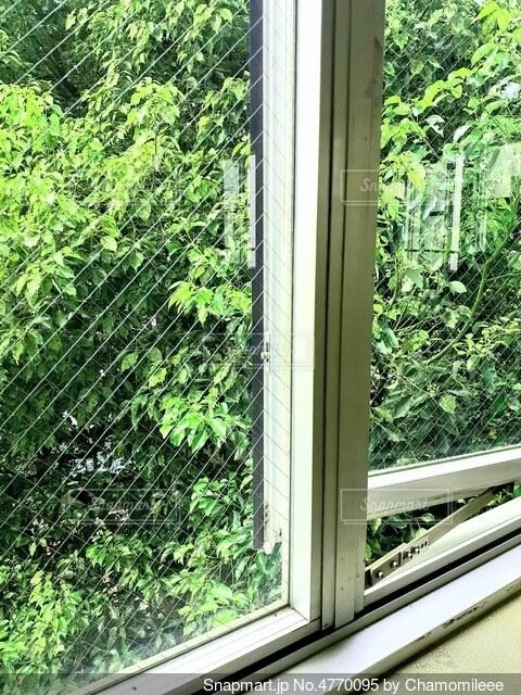 窓と緑の写真・画像素材[4770095]