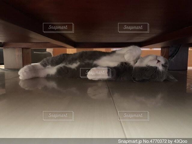 床に横たわる猫の写真・画像素材[4770372]