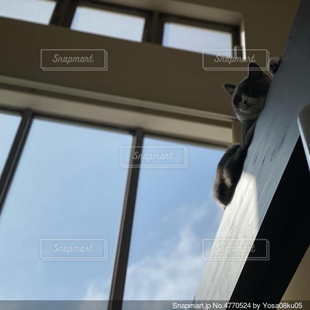 空と猫の写真・画像素材[4770524]