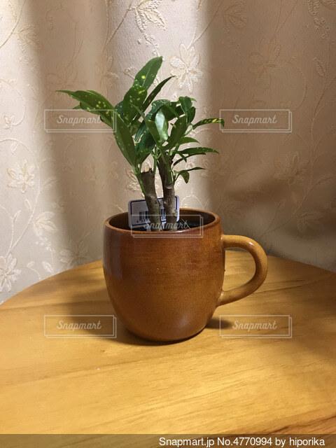 テーブルの上にコップに入った観葉植物の写真・画像素材[4770994]