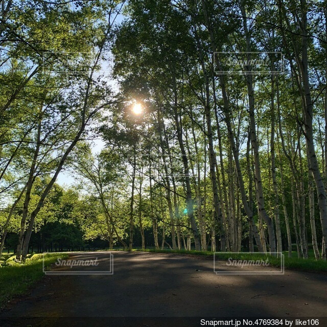 森の中の木の写真・画像素材[4769384]