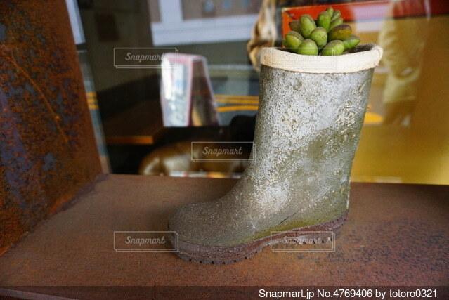 長靴と植物の写真・画像素材[4769406]
