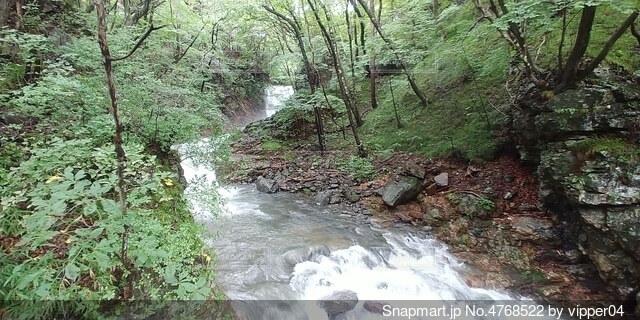 森の中の川の写真・画像素材[4768522]
