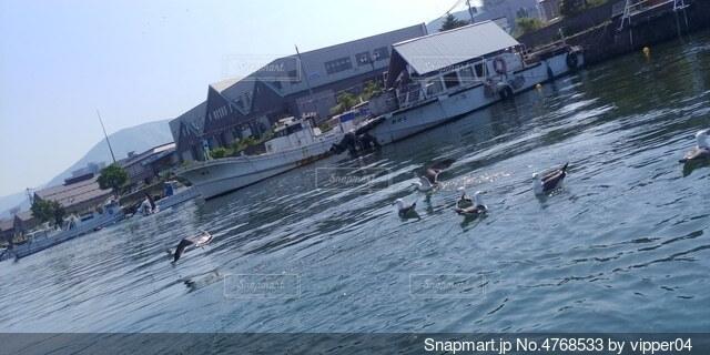 ボートと飛び立つ水鳥の写真・画像素材[4768533]