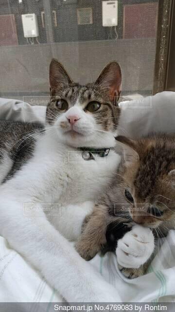 出窓猫の写真・画像素材[4769083]