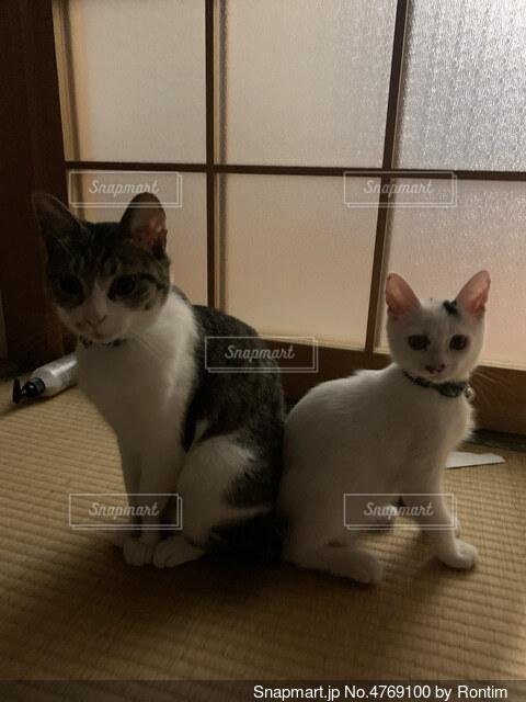 猫ハートの写真・画像素材[4769100]