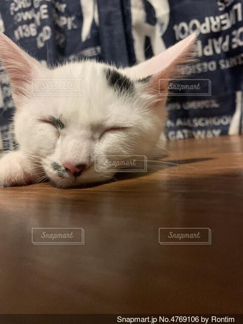 テーブルの上に横たわっている猫の写真・画像素材[4769106]