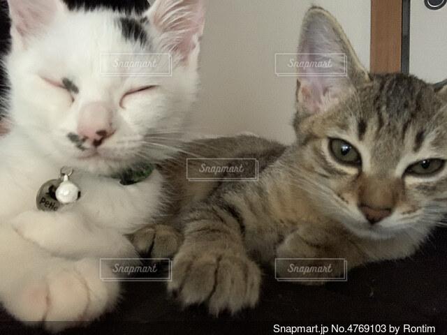 横になってカメラを見ている猫の写真・画像素材[4769103]