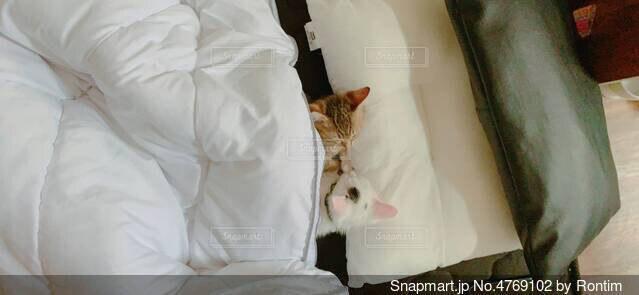 ベッドに横たわる猫の写真・画像素材[4769102]
