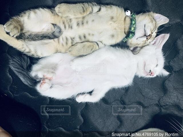 仰向け猫の写真・画像素材[4769105]
