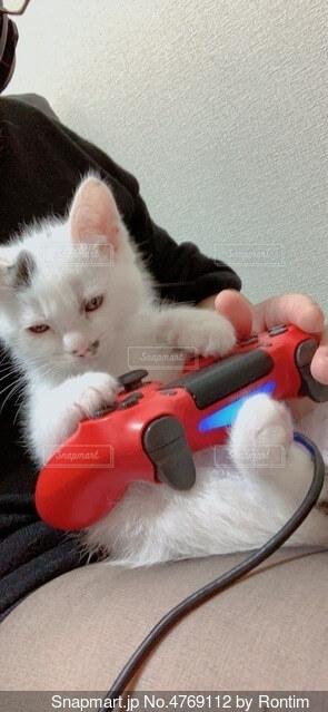 ゲーム猫の写真・画像素材[4769112]