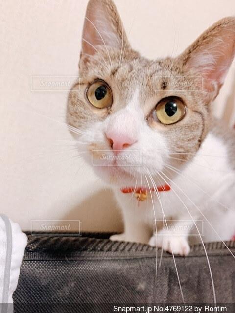 猫の写真・画像素材[4769122]