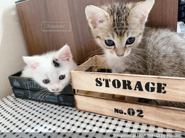 箱入り猫の写真・画像素材[4769123]