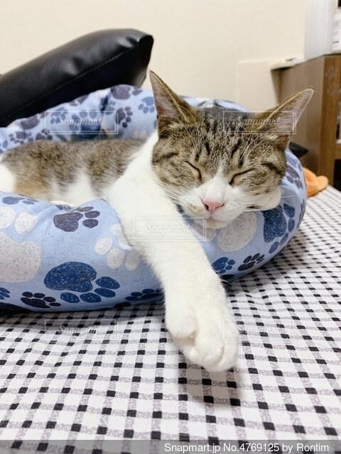 ねんねん猫の写真・画像素材[4769125]
