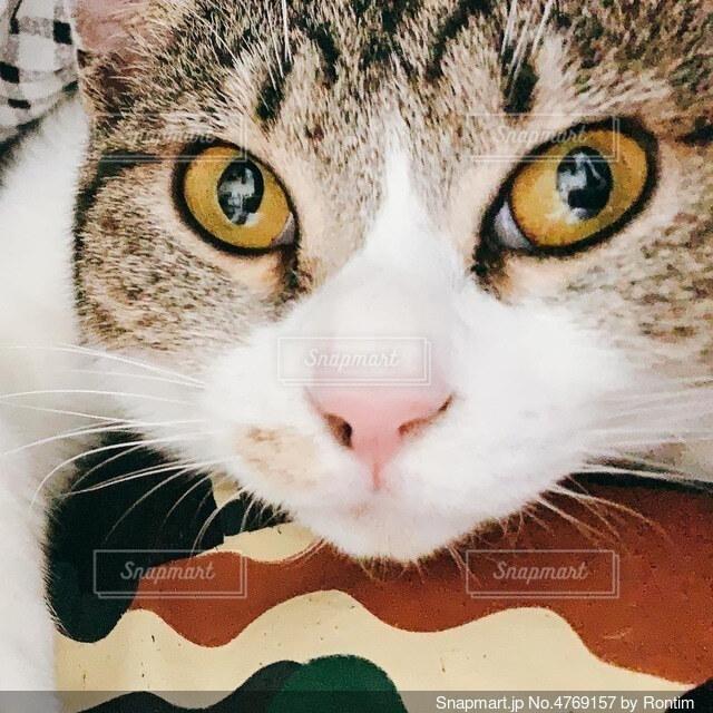 猫ドアップの写真・画像素材[4769157]
