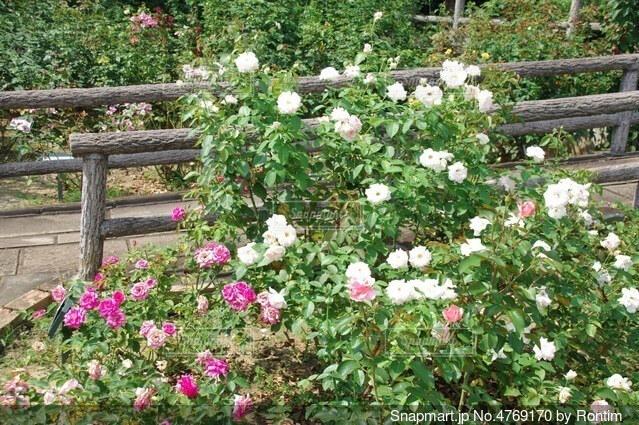 花畑の写真・画像素材[4769170]