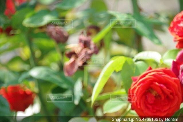 花のフレームの写真・画像素材[4769166]