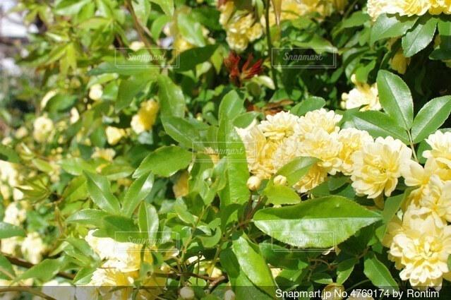 花畑の写真・画像素材[4769174]