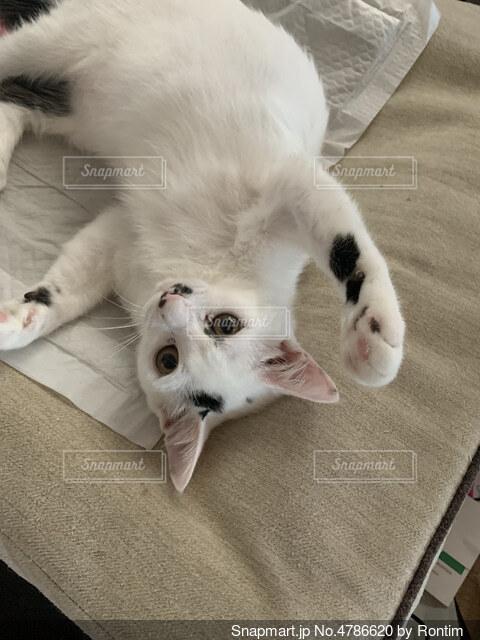 両手広げてる猫の写真・画像素材[4786620]