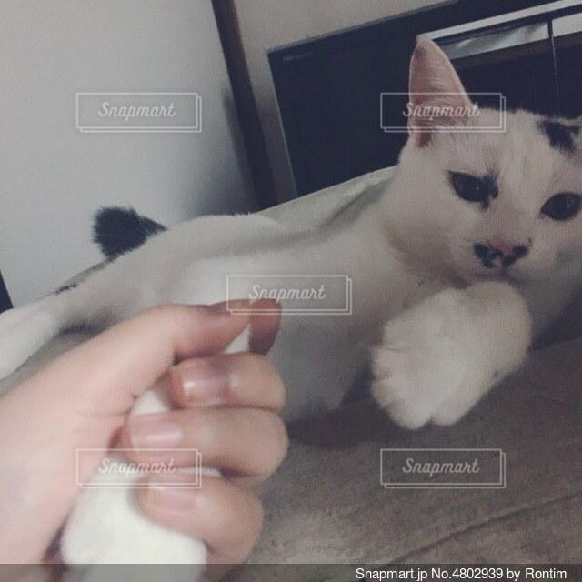 手を握れれる猫の写真・画像素材[4802939]