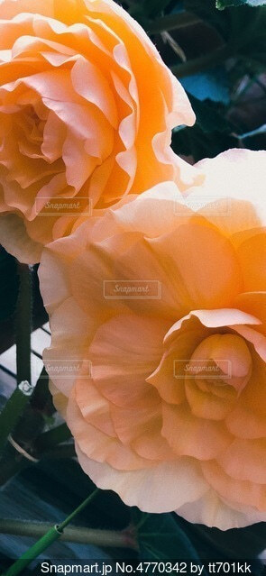 お花の写真・画像素材[4770342]