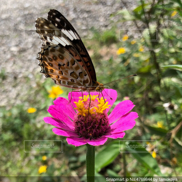 花と蝶の写真・画像素材[4769844]