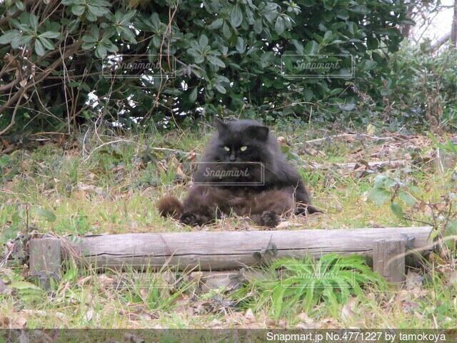 草の中に座っているクマの写真・画像素材[4771227]