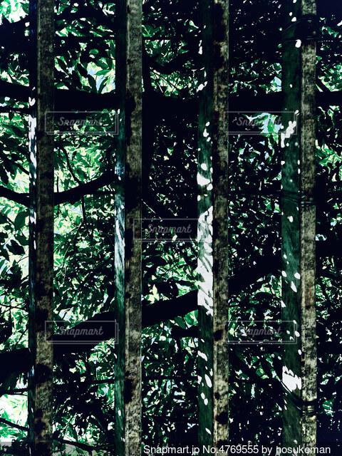 木漏れ日が漏れるの写真・画像素材[4769555]