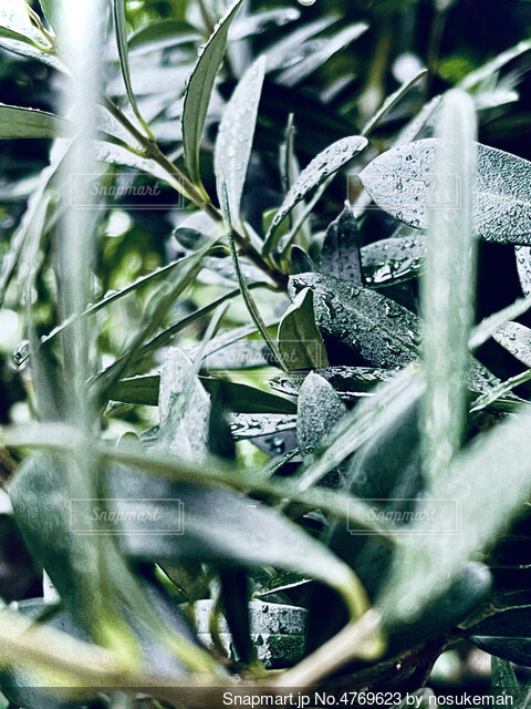 木のクローズアップの写真・画像素材[4769623]